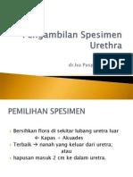 mk-pengambilan-spesimen-urethra.ppt