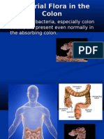 Bacterial Flora in the Colon
