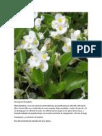 Descripción de la planta.docx
