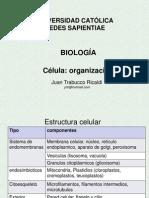 BII Célula_Organelos .2.pptx
