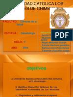 Trastornos motores de mediación central.pdf