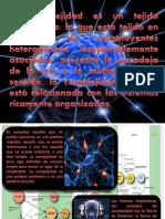 3. COMPLEJIDAD.pdf