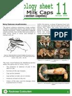 Rockrose-Ethnobiology sheet 11 Lactarius.pdf