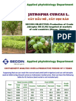 Jatropha Cultivation Compared to Acacia Cultivation