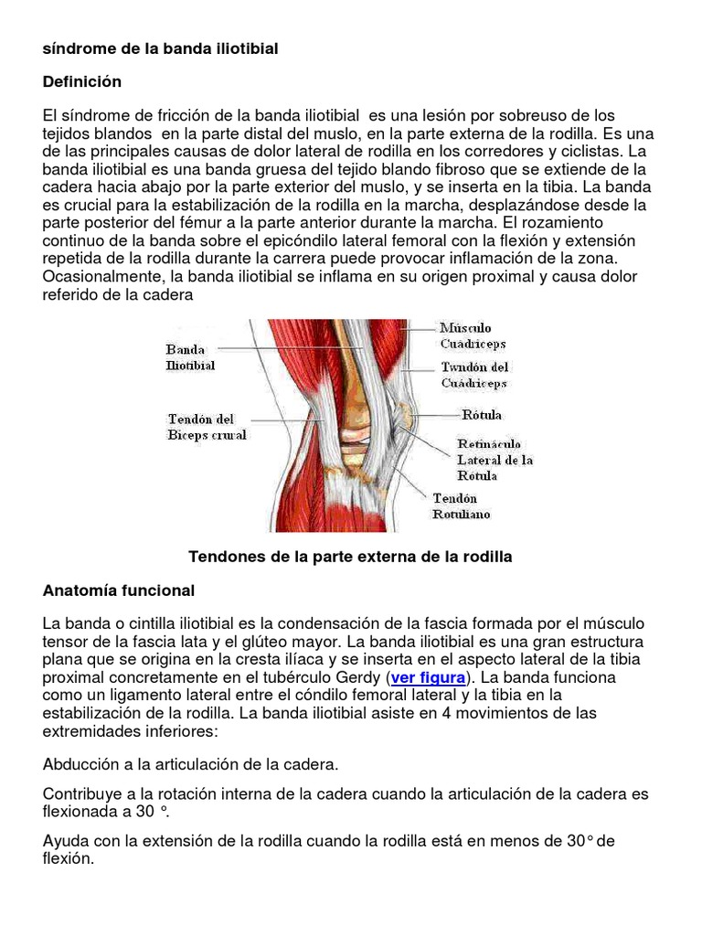 Vistoso Inspiración Definición Anatomía Inspiración - Imágenes de ...