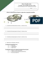 1.3 - Diversidade dos animais - Alimentação -  Ficha Trabalho (2).pdf