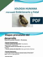132092915-5-PERIODO-EMBRIONARIO-Y-FETAL-ppt.ppt