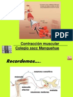 Fisiologia-muscular.ppt