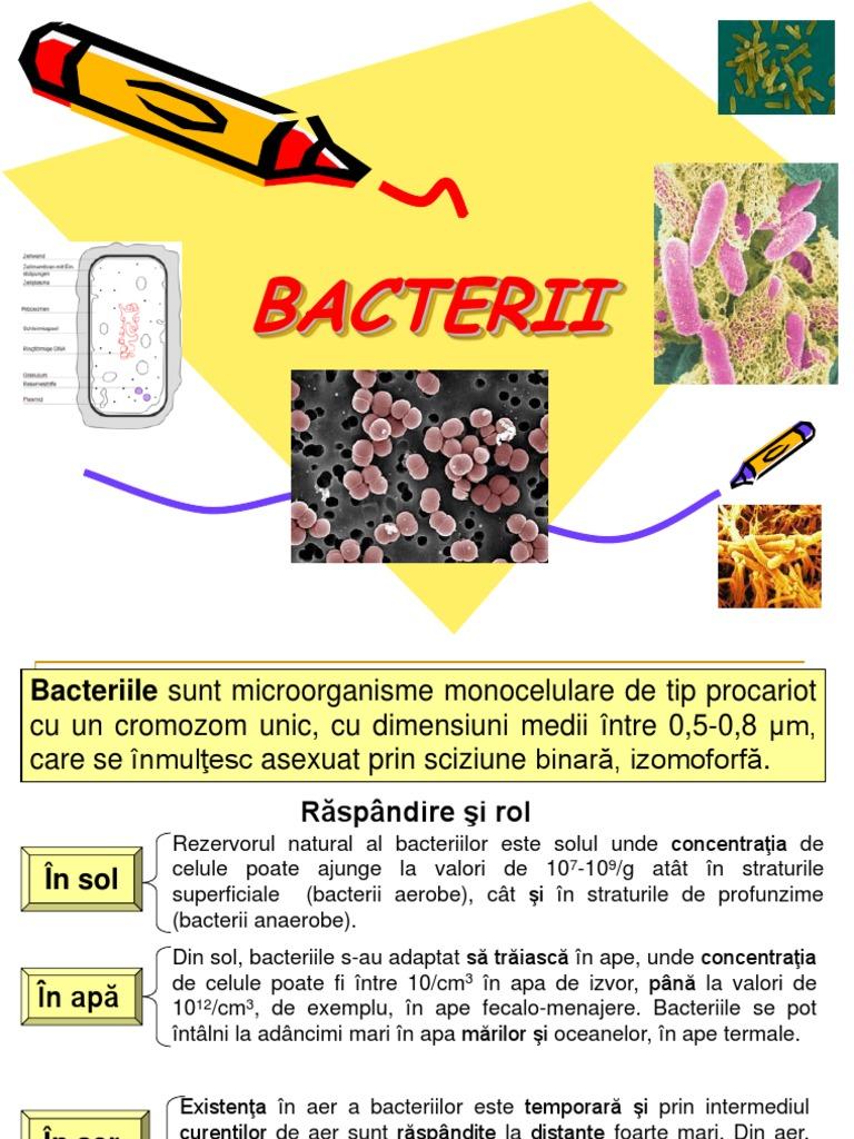 bacterii mezofile