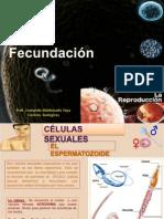 la fecundacion humana.pptx