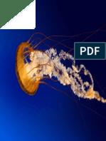 Jellyfish.pdf