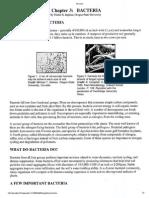soil organisms info