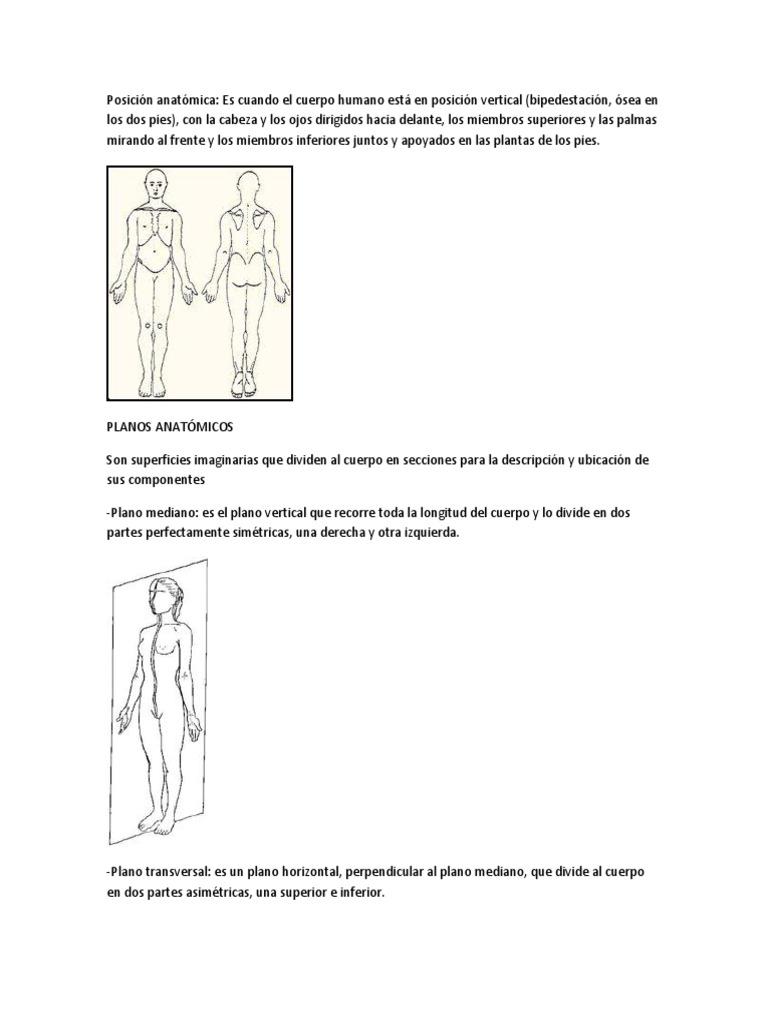 Posición anatómica.docx