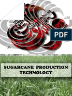 SugarCane 2013.pptx