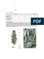 ecologia arboles.docx