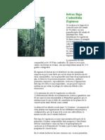 Selvas Baja Caducifolia Espinosa