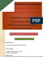 INFORME FINAL DE PRACTICAS DE PARASITOS II.pptx