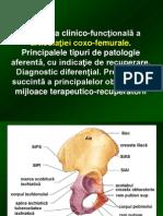 LP 2 - Coxo-femurala
