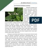 Tanaman sembukan (Paederia scandens)