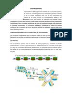 Cromosomas y Cariotipo Humano.doc (1).docx