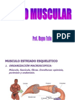 5.TEJIDO MUSCULAR.ppt