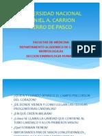 4. desarrollo del aparato CV.pptx