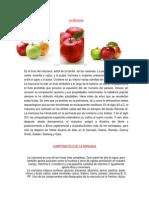 COMPONENTES DE LA MANZANA.docx