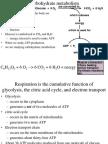 metabolismo general.ppt