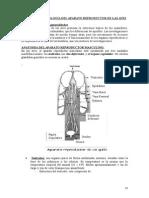 ANATOMIA DEL APARATO REPRODUCTOR DE LAS AVES.doc