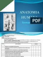 ANATOMIA SEMANA 1.pptx