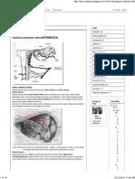 anatomi obstetri.pdf