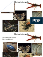 2. Content Arthropods