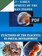 2. Content Placenta