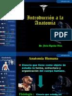 1. ANATOMIA DERECHO 2014.ppt