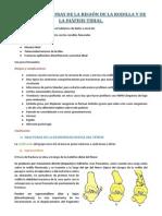 420-2014-02-18-22 Fracturas de la rodilla.pdf