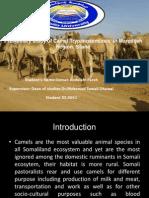 preliminary study of Trypanasoma evansi at Marodi Jeh Region Thesis Presentation