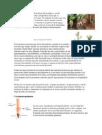 La raíz es la porción inferior del eje de la planta y.pdf