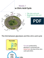 3 - Citric Acid Cycle(2)