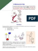 A Molécula da Vida_dna.doc