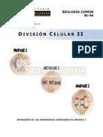División Celular II.pdf