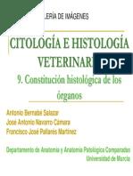9-organo-parenquimatoso-y-membra.pdf