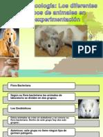 animales de practica farmacologicas.pptx