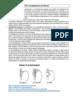 Nissen - Válvula de fonación.docx