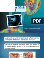 ANATOMÍA DE LA PRÓSTATA.pptx