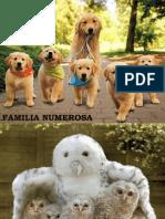 Familia Numerosa-large Family