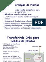 Biologia de Agrobacterium e Transformação de Plantas.pdf
