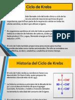 Ciclo_del_Acido_Citrico.ppt