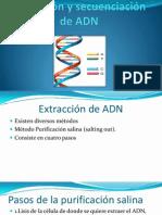 seminario ADN.pptx