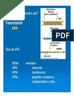 6-Transcrip y Procesam RNA 13