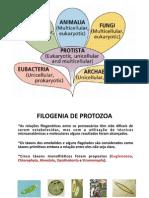AULA DE PROTOZOA.pdf